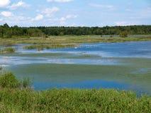 与湖的风景在夏日 免版税库存图片