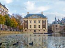 与湖的Mauritshuis foregroundwith老傻瓜游泳的 免版税图库摄影