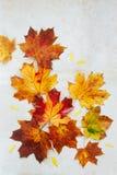 与湿叶子的秋季平的位置 库存图片