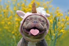 与滑稽的桃红色独角兽帽子、闭合的非常突出在模糊的黄色花的眼睛和舌头的淡紫色烟草花叶病的色的法国牛头犬狗 图库摄影