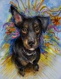 与滑稽的耳朵混合画法的小狗 免版税图库摄影