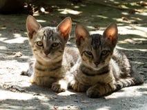 与滑稽的表示的逗人喜爱的猫小猫 库存图片