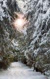 与滑雪跟踪的斯诺伊运输路线 库存图片
