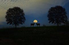与满月的夫妇羚羊 图库摄影