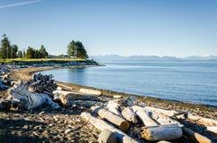 与漂流木头和清楚的天空的离开的海滩 库存图片