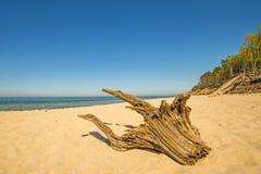 与漂流木头和蓝天的幽静海滩 免版税库存图片