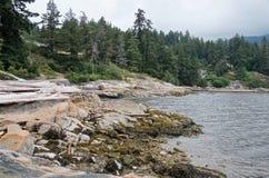 与漂流木头的岩石海滨在多云多雨天气, 免版税库存照片