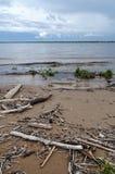 与漂流木头和天空的灰色海滩 免版税图库摄影