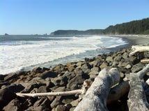 与漂流木头的Beachscape在Rialto 免版税库存图片