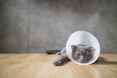 与漏斗锥体衣领的病的猫防止他抓痕他的耳朵 库存照片