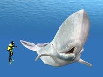 与潜水者的抹香鲸 库存图片