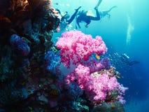 与潜水者的软的珊瑚 图库摄影