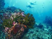与潜水者的软的珊瑚 免版税库存图片