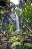 与瀑布的密林风景 免版税库存照片