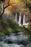 与瀑布的美丽的景色在森林里 免版税库存图片