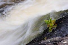 与瀑布的年轻杉木 库存图片