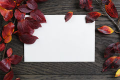 与灌木叶子和纸牌的秋天背景在老桌上 免版税库存图片