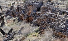 与灌木和冰砾的岩层 免版税图库摄影