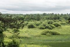 与灌木和树,雨天空,夏天多云天,自然风景背景的谷 库存照片