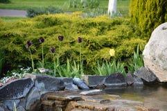 与灌木和草坪的微型瀑布 免版税库存图片