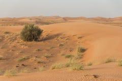 与灌木和风踪影纹理的沙丘在迪拜 库存照片
