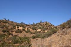 与灌木的沙漠小山 库存图片