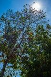 与火光的树从太阳 免版税库存照片