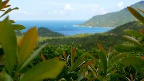 与火山的山的热带雨林风景在异乎寻常的海岛上豪华的绿色密林  股票录像