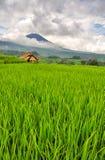 与火山的米领域在云彩 巴厘岛印度尼西亚 免版税图库摄影