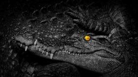 与火热的眼睛的鳄鱼在母亲旁边 股票视频