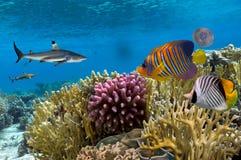 与火珊瑚和异乎寻常的鱼的珊瑚礁 免版税库存图片