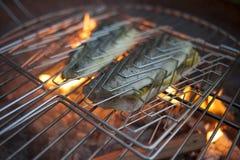 与火的烤鳟鱼在背景中 库存图片