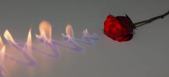 与火的红色玫瑰发光的表面上在演播室 免版税库存图片