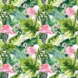 与火鸟的热带被隔绝的无缝的样式 水彩热带图画、玫瑰色鸟和绿叶棕榈树,回归线 免版税图库摄影