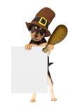 与火鸡腿和标志的感恩狗 库存照片