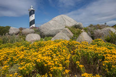 与灯塔的黄色花在背景中 库存图片