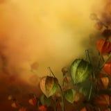 与灯笼花的秋天背景。 图库摄影