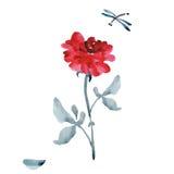 与灰色的一朵典雅的大红色玫瑰在白色背景离开和蜻蜓 水彩 免版税库存照片