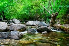 与灰色石头和树的小河 免版税图库摄影