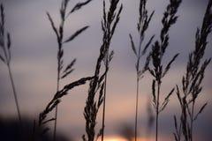 与灰色色的天空的乡下日落 库存图片