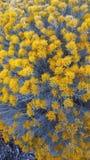 与灰色词根的黄色野花 免版税库存图片