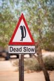 与灰鼠的滑稽的缓慢的警报信号在非洲 免版税库存图片