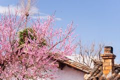 与烟囱和开花的美丽的老迷人的中国村庄 免版税库存照片