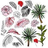与热带叶子和花的美好的手拉的植物的传染媒介例证 ?? 皇族释放例证