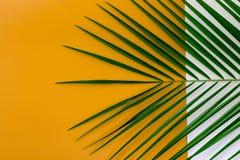 与热带叶子的最小的夏天背景概念 免版税库存图片