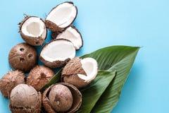 与热带叶子的椰子在蓝色背景 平面 库存图片