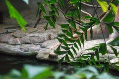 与热带叶子的自然蕨背景 免版税库存照片