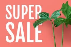与热带叶子的超级销售文本在淡色背景中 免版税库存图片