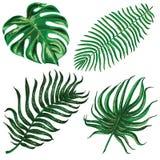 与热带异乎寻常的叶子的传染媒介集合 免版税图库摄影