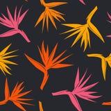 与热带异乎寻常的花天堂鸟的无缝的样式以橙黄色,红颜色 免版税图库摄影
